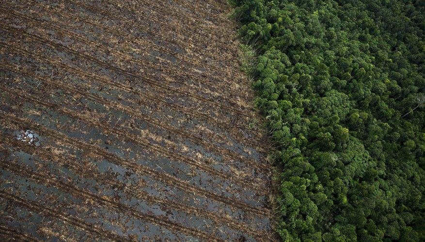 Deforestación de la selva tropical en el sur de Sumatra, Indonesia.