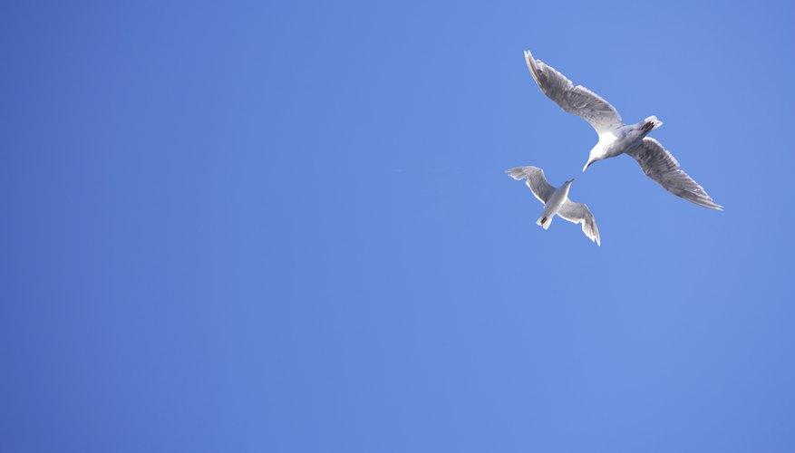 Seagulls flying against a blue sky.