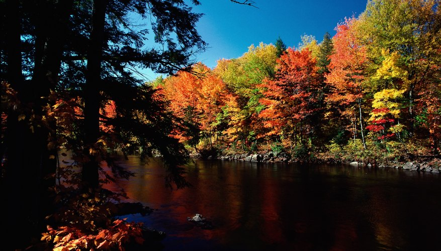 Trees around a lake with fall color