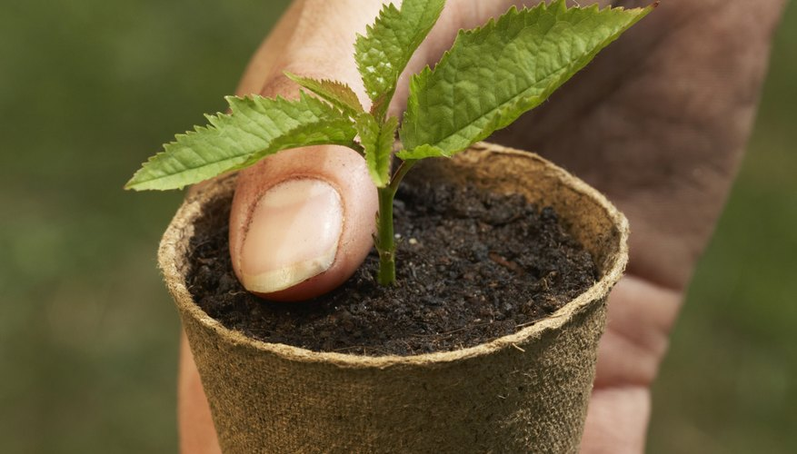 How to Plant Seedlings in Coco Coir | Garden Guides