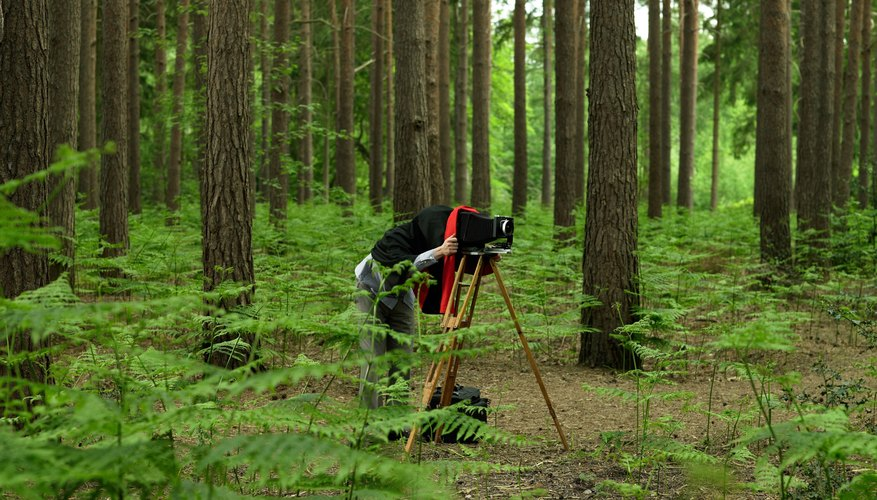Photographer taking a photo in the woods on an old fashion camera.