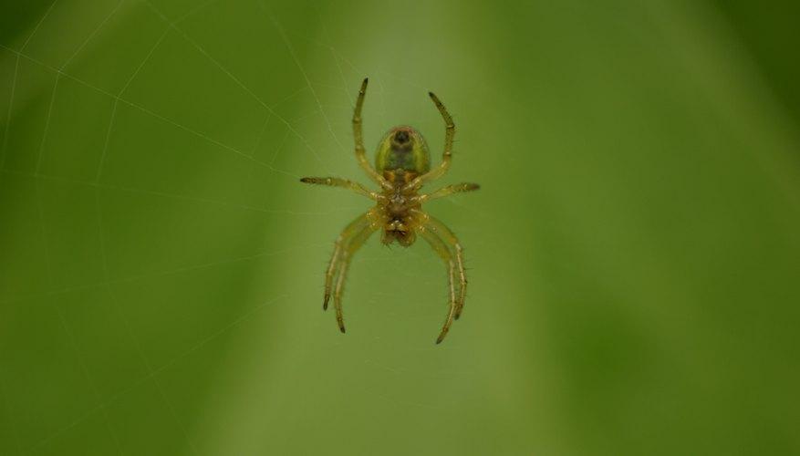 Repele a las arañas con aceite vegetal.