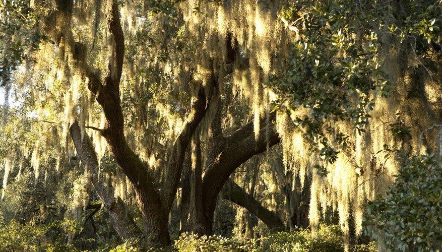 Carolina del Sur es el hogar de un gran número de reservas naturales que las familias pueden visitar.