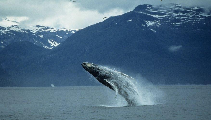 Productos de ballenas.