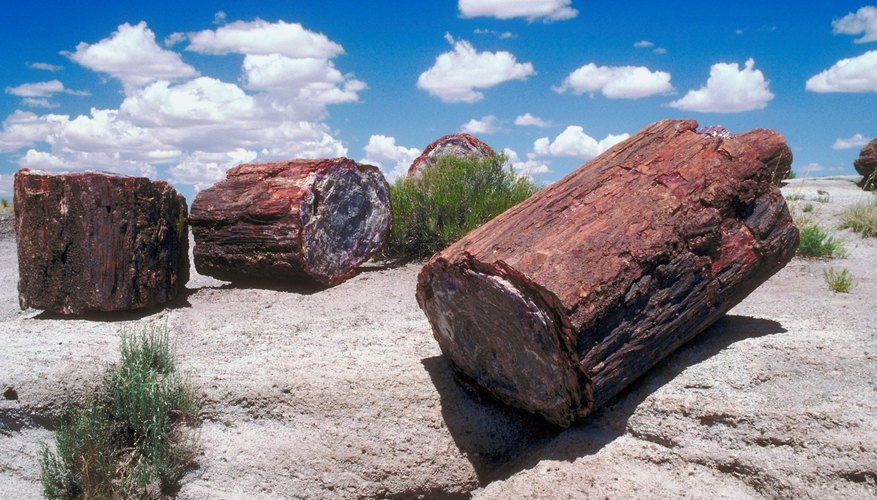 Petrified wood can be cut one slice at a time.