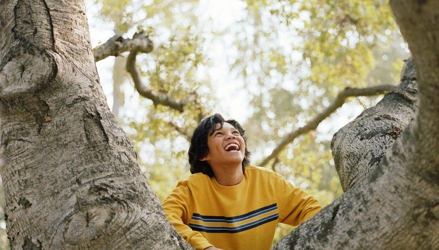 Oak trees make a property more desireable.