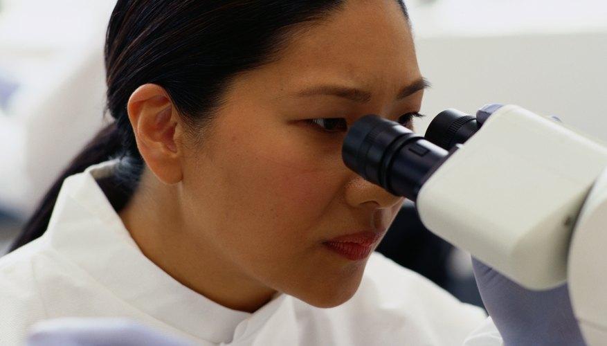 Scientist viewing samples of bacteria