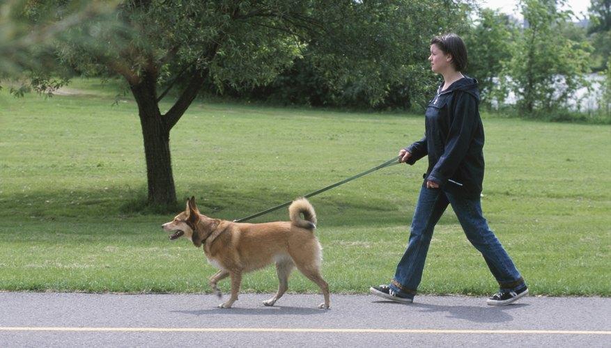Vigila el consumo de agua de tu perro o presta atención a la frecuencia con la que tiene que ir afuera.