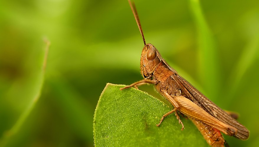Insects that jump do so to conserve energy when changing locations or to escape predators.