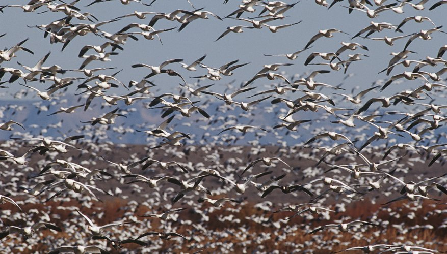 birds are social and often travel in flocks