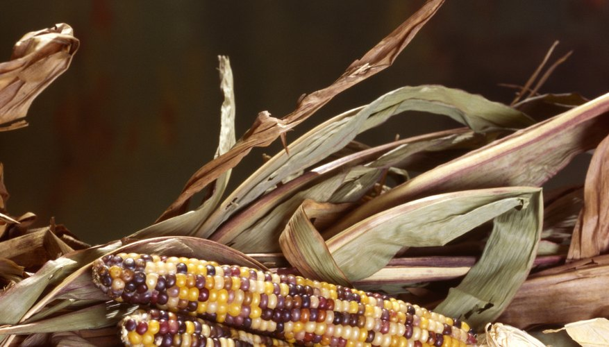 The length of corn ears is a quantitative trait.