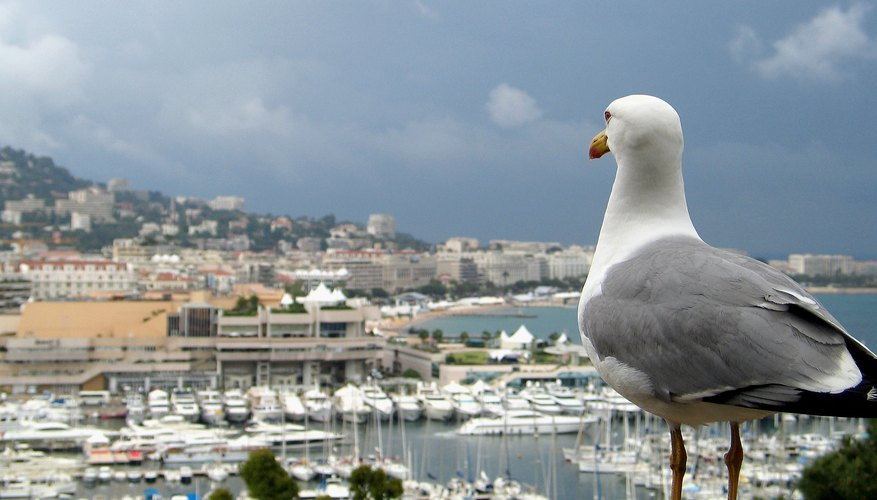 Seagull Behaviors In Earthquakes and Changes in Weather