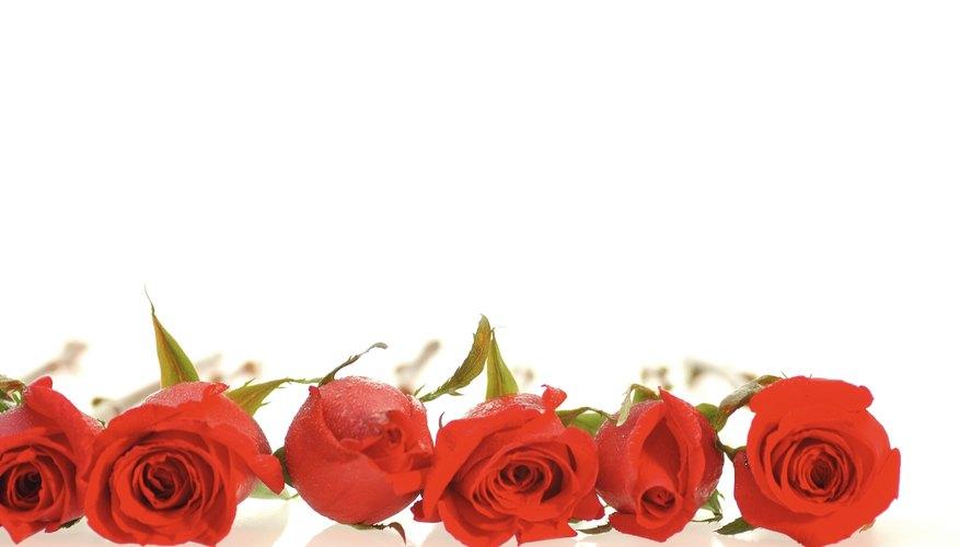 El encerado extiende la vida de las rosas.
