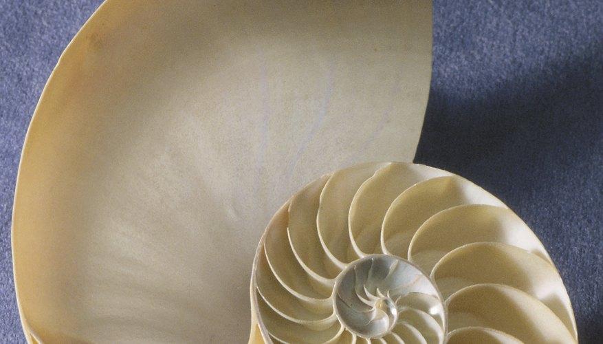 Los jarrones con conchas marinas agregan un toque marino a la decoración de tu hogar.