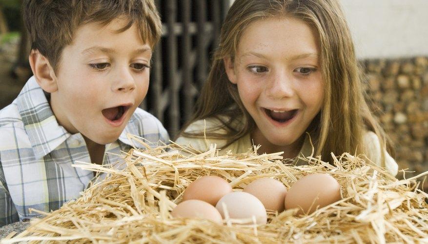 Dale a tu hijo un tiempo a solas con huevos de verdad en su hábitat natural.