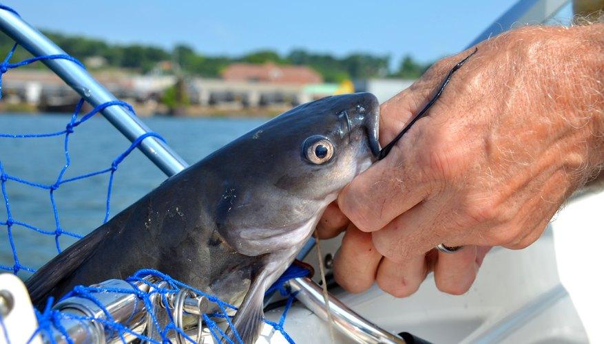 Where to Go Fishing for Catfish in Minnesota