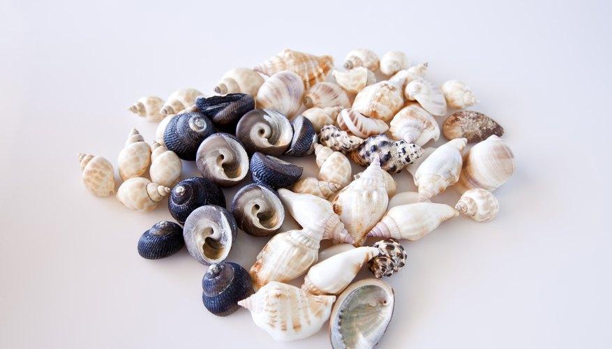 Sea snails.