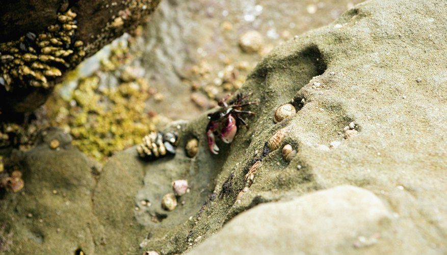 Numerous varieties of bugs and other animals live in the sand.