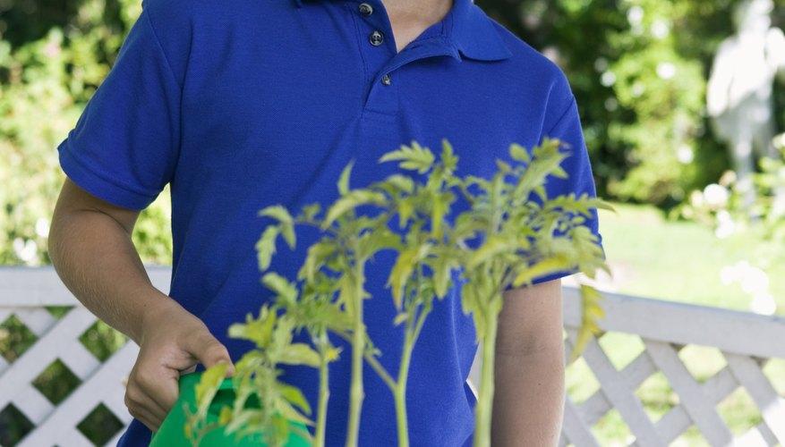 La mayoría de plantas necesitan luz solar para crecer adecuadamente.