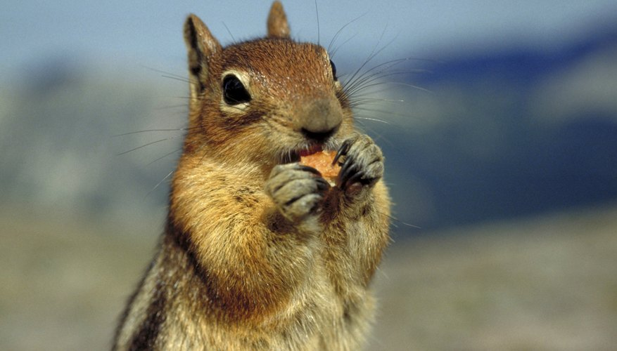 How To Get Rid Of Squirrels In Between Floors Garden Guides