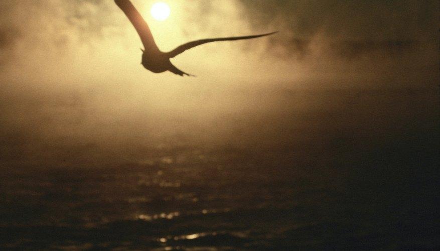 La ecolocación es poco común entre las aves.