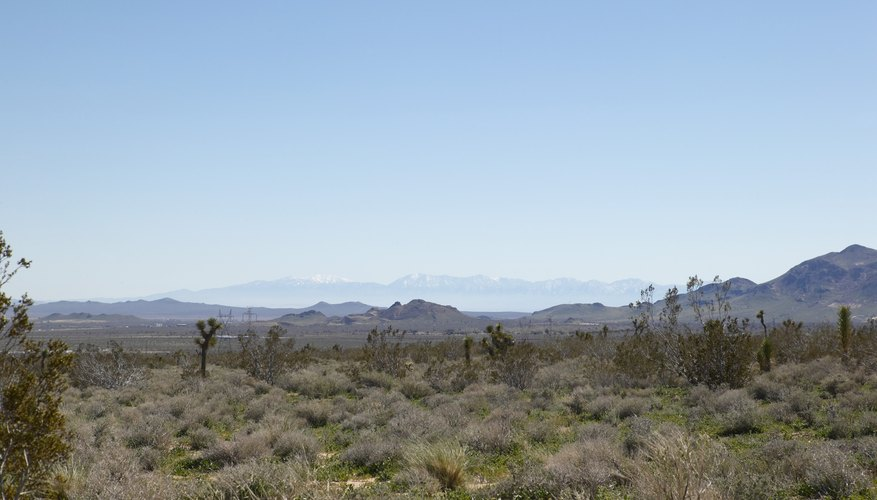 Joshua Tree National Park is one of many recreational areas in the Mojave Desert.