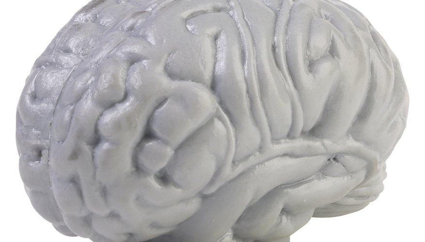 the different factors affecting brain growth Experiment 6 factors influencing the growth of microbes the survival and growth of a microbe is a function of a myriad of different activities.
