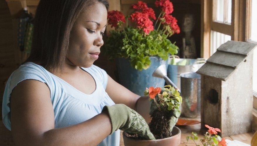 Haz tus macetas de yeso a prueba de agua antes de plantar en ellas.