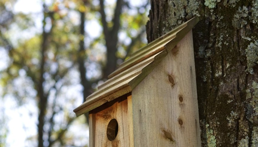 A Simple Birdhouse Pattern Is Suitable Starter Project For Your Teen