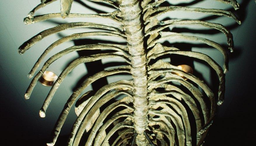 La edad absoluta permite a los científicos saber de qué era son los fósiles.