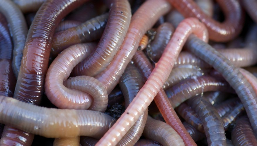 pile of earthworms