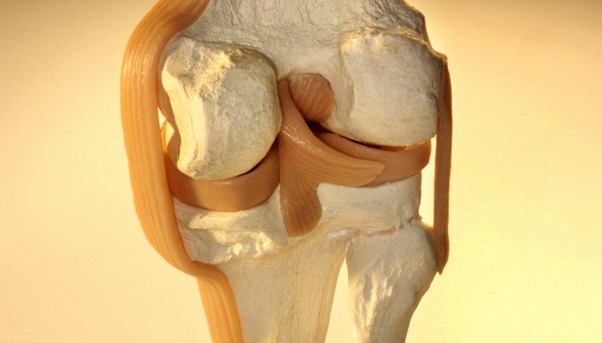 El tejido epitelial está separado del tejido subyacente por una fina capa de tejido conectivo.