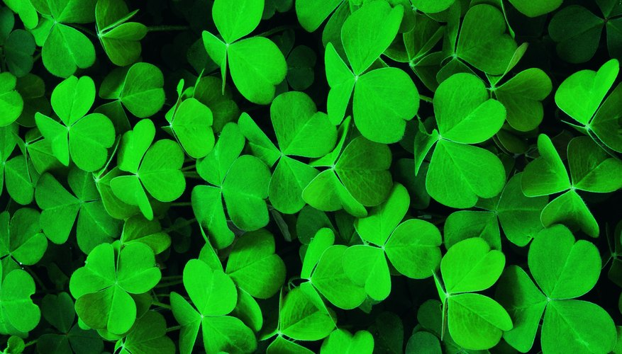 There are various ways to kill ground clover.