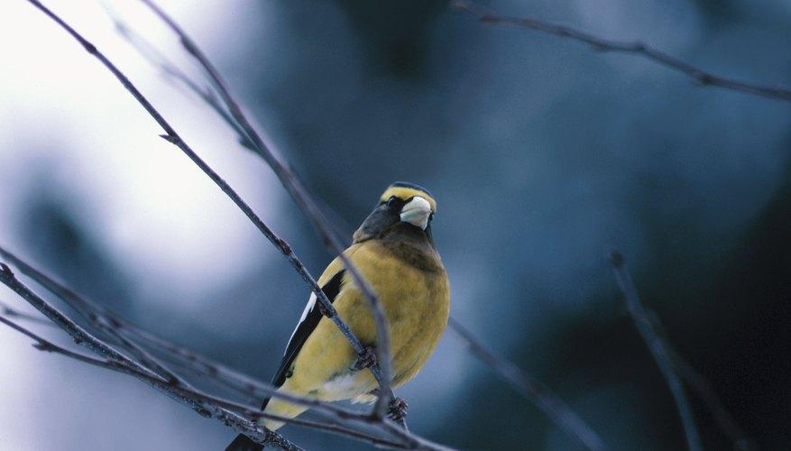 Instead of bird watching, take your teen out for a bird-listening activity.