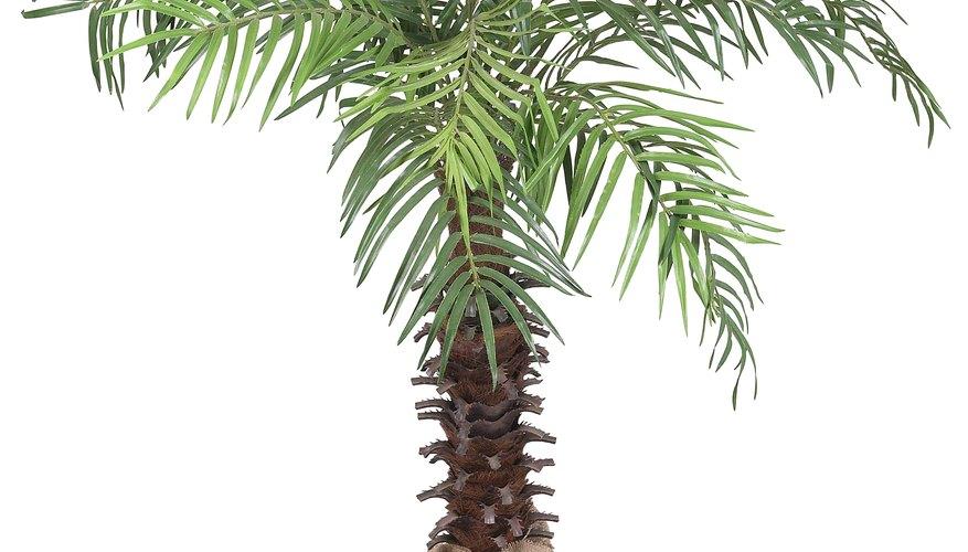 Las palmeras son accesorios ideales para fiestas de disfraces que tienen como temática una playa o luau.