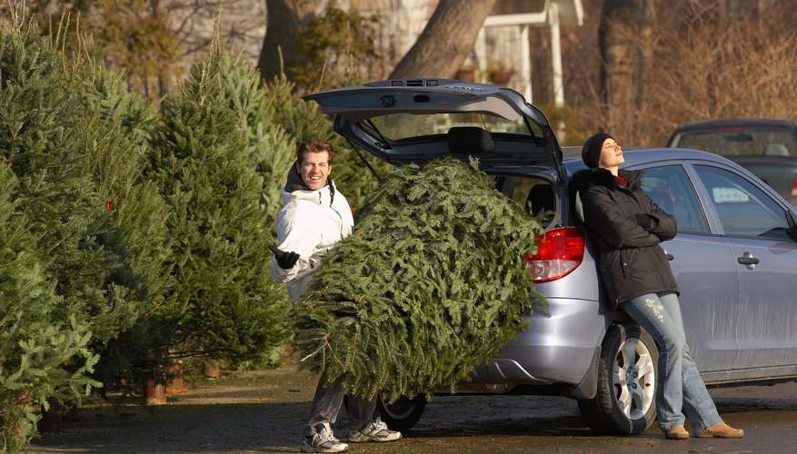 Man struggling to load Christmas tree while woman rests
