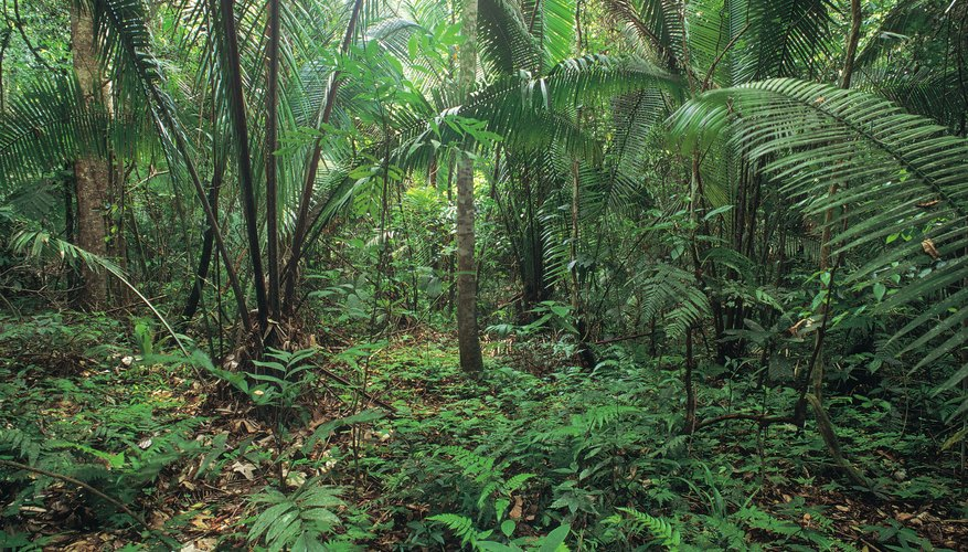 amazon rainforest plants and names. it is estimated that 80 percent of the worldu0027s green flowering plants are in amazon rain forest about 1500 species higher ferns and rainforest names