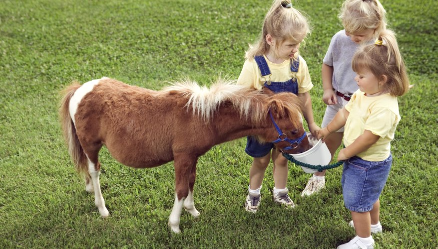 Some pony party rental companies will allow kids to feed the ponies.