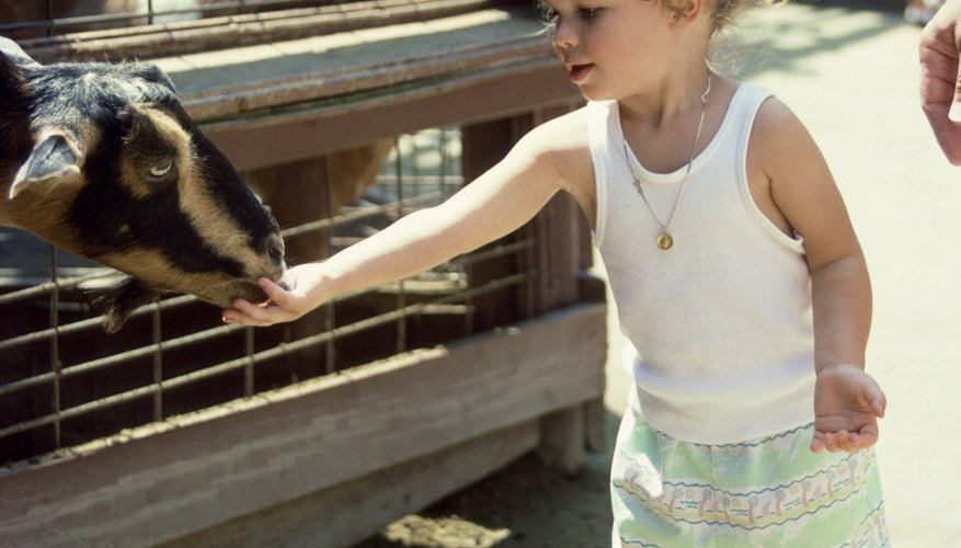 A field trip to a petting zoo can be education and fun for toddlers.