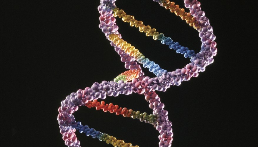 DNA is made of base pairs and a sugar and phosphate backbone.
