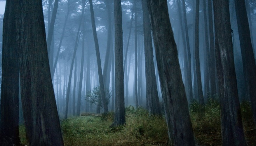 Cool forest