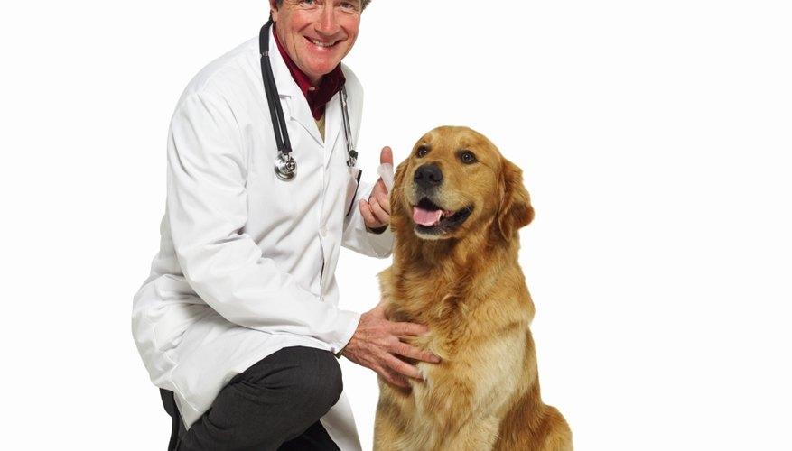 Abre un consultorio veterinario.