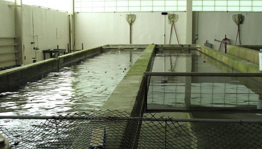 Raceway in trout nursery