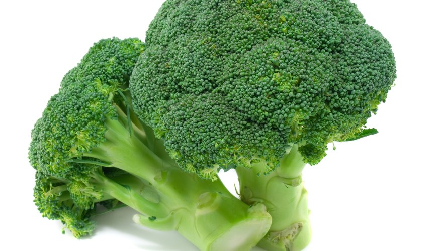 Broccoli loses its bright green color during the cooking process because of a breakdown of chlorophyll.