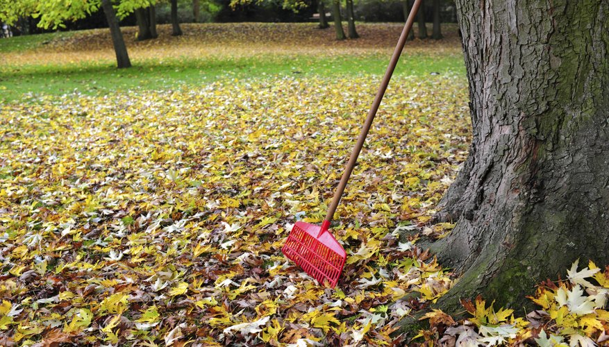 Leaf rake leaning against tree over pile of leaves.