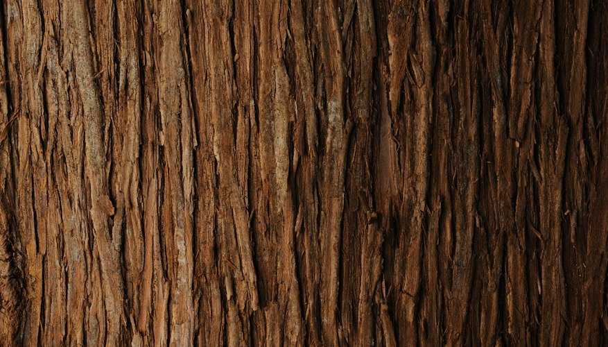 Cedar bark is fibrous and thready.