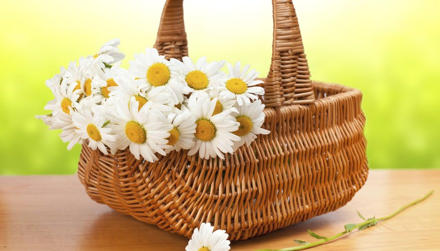 A basket of daisies offers hope and cheer.