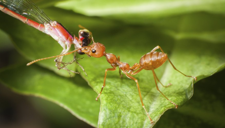 Two insects facing each other on a green leaf.