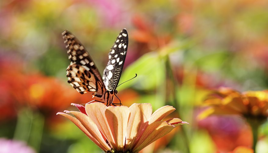What do Butterflies do for the Environment