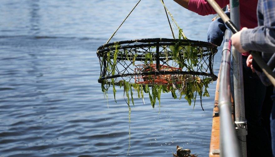 Crab Fishing in North Carolina